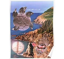 Migration to Dolphin Coast. Poster