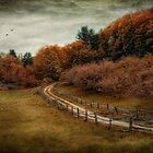 The Road Less Traveled by Robin-Lee