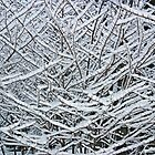 Snowy Branches by Chris  Bradshaw