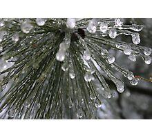 Frozen Evergreen  Photographic Print