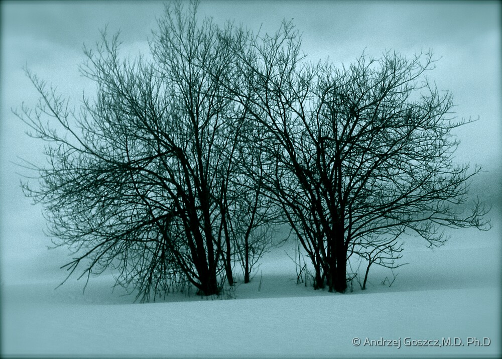 The snow! the snow! Whoop! Hooray! Ho! Ho! Views (12) thx! by © Andrzej Goszcz,M.D. Ph.D