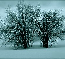 The snow! the snow! Whoop! Hooray! Ho! Ho! Views (12) thx! by © Andrzej Goszcz,M.D. Ph.D