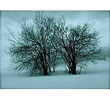 The snow! the snow! Whoop! Hooray! Ho! Ho! Views (12) thx! Photographic Print