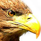Radiance of the Raptor up close and personal by Anthony Hedger Photography