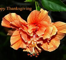 Orange hibiscus thanksgiving by ♥⊱ B. Randi Bailey
