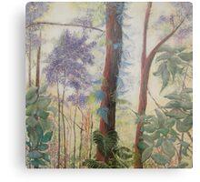 Daintree Forest Queensland Australia Metal Print