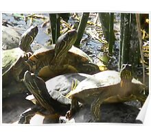 Totally Turtles Poster