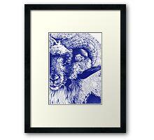 Icelandic Ram Framed Print