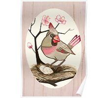 Female Cardinal and Cherry Blossoms Poster