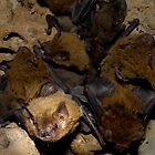 Bat colony by Reddirt
