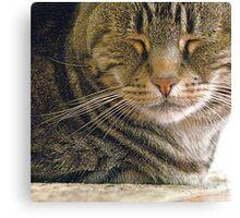 Feline Zen Canvas Print
