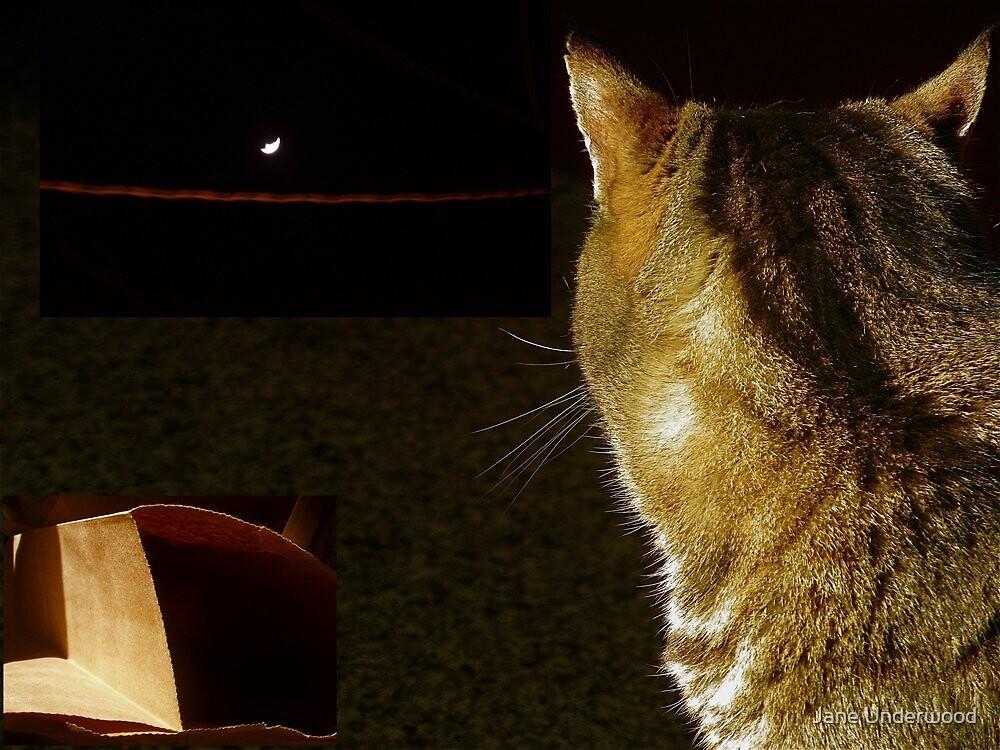 Cat, Moon, Paper Bag by Jane Underwood