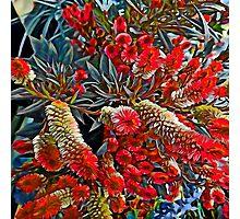 Flowers #13 Photographic Print