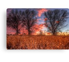 Not Four Trees Canvas Print