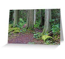 Through the Cedar Trees  Greeting Card