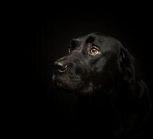 Black Labrador by jaclyn-kavanagh