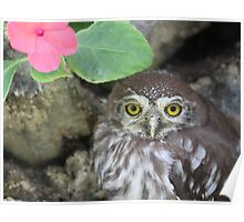 Little owl lost Poster