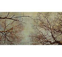 Un hiver Photographic Print
