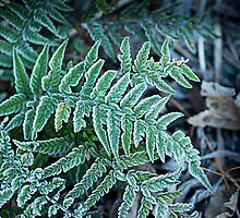 Icing Sugar Fern by Gillian Cross
