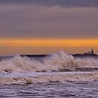 Coquet Island by David Pringle