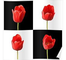 Red Tulips against a Black and White Check Background Wall Art Poster