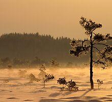 24.1.2012: Magic of Winter by Petri Volanen