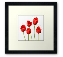 Red Tulips against a White Background Wall Art Framed Print