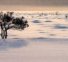 24.1.2012: Pine Tree, Winter Day II by Petri Volanen