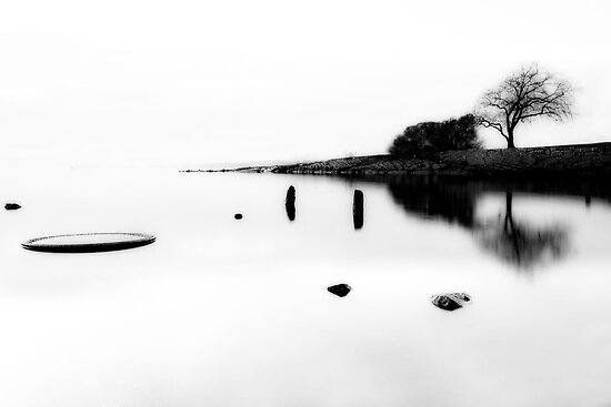 A tree by the sea by Erik Brede