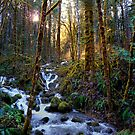 North Fork Beauty by Charles & Patricia   Harkins ~ Picture Oregon