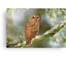 Owl Time Canvas Print