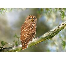 Owl Time Photographic Print