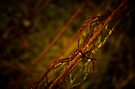 Barbed Wire by Emma  Gilette