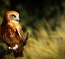 Owl by Day by Emma  Gilette