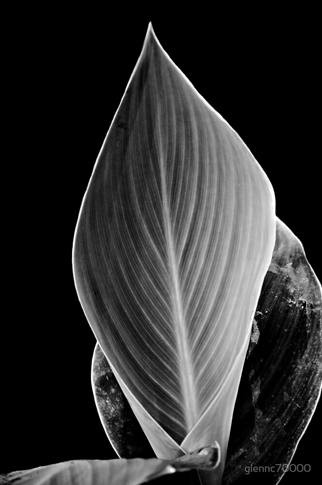 Mono Calla Leaf by glennc70000