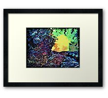 Fish Peek A Boo Framed Print