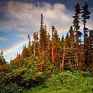 Rainbow Forest by John  De Bord Photography