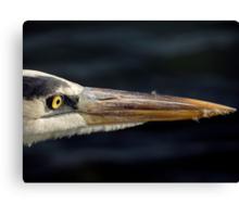 Avian Close Up Canvas Print
