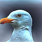 Portrait of a Herring Gull  by larry flewers