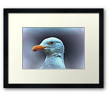 Portrait of a Herring Gull  Framed Print