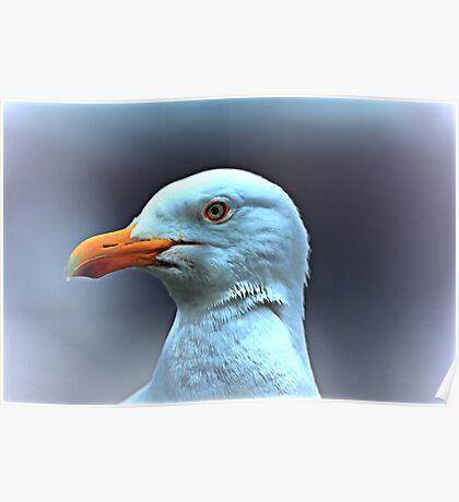 Portrait of a Herring Gull  Poster
