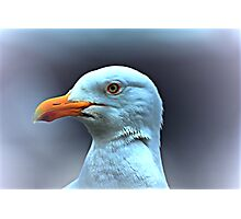 Portrait of a Herring Gull  Photographic Print