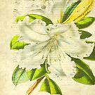 Flower's Beauty © by Dawn M. Becker