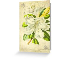 Flower's Beauty © Greeting Card