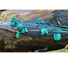 Green Elf Cup. Photographic Print