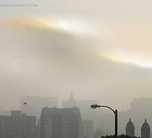 San Francisco Morning Fog by David Denny