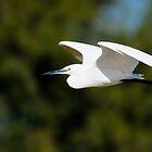 Little Egret in Flight by Sammy77