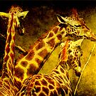 Giraffes galore by Alan Mattison IPA