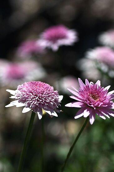 Pink Thunder by Joy Watson