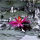 Water Lily by Jorge's Photography